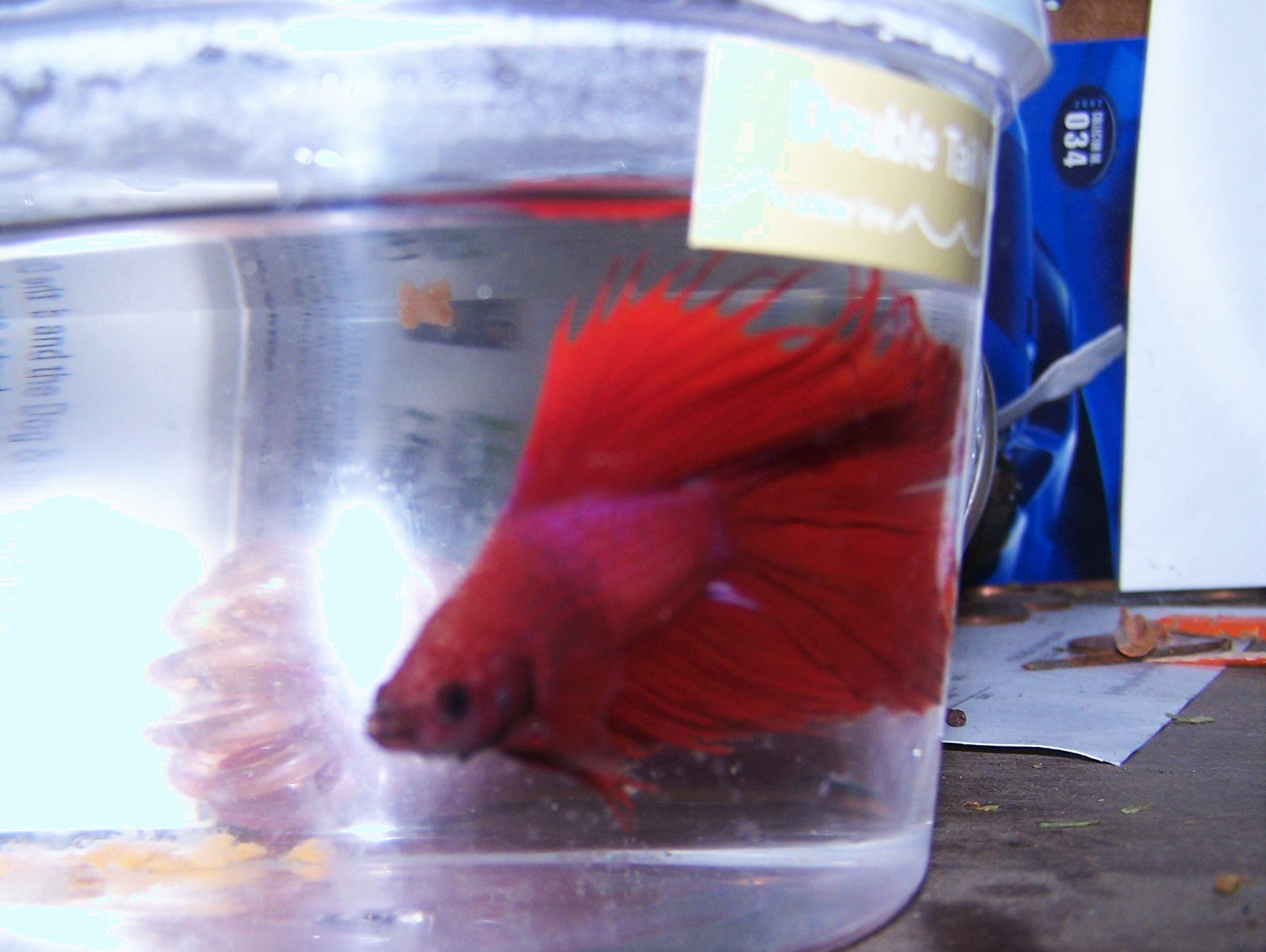 Siamese Fighting Fish Online Trade Show